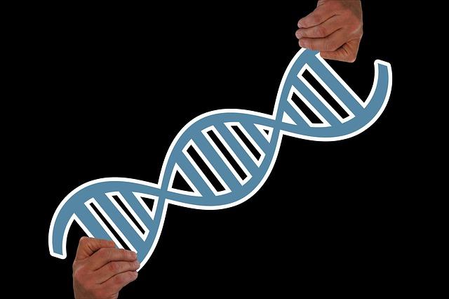 řetězec šroubovice DNA