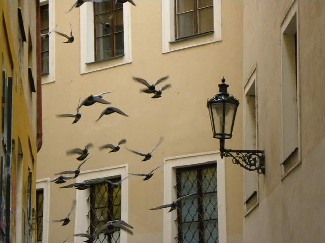 holubi ve Zlaté uličce